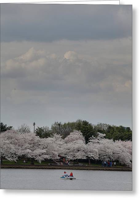 Cherry Greeting Cards - Cherry Blossoms - Washington DC - 01139 Greeting Card by DC Photographer