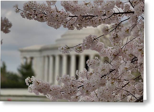 Cherry Blossoms with Jefferson Memorial - Washington DC - 01133 Greeting Card by DC Photographer