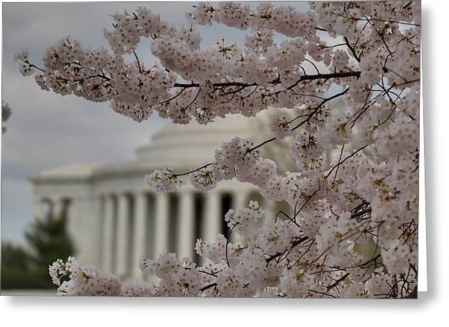 Trunk Greeting Cards - Cherry Blossoms with Jefferson Memorial - Washington DC - 01134 Greeting Card by DC Photographer