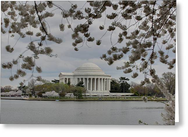 Japanese Greeting Cards - Cherry Blossoms with Jefferson Memorial - Washington DC - 01137 Greeting Card by DC Photographer