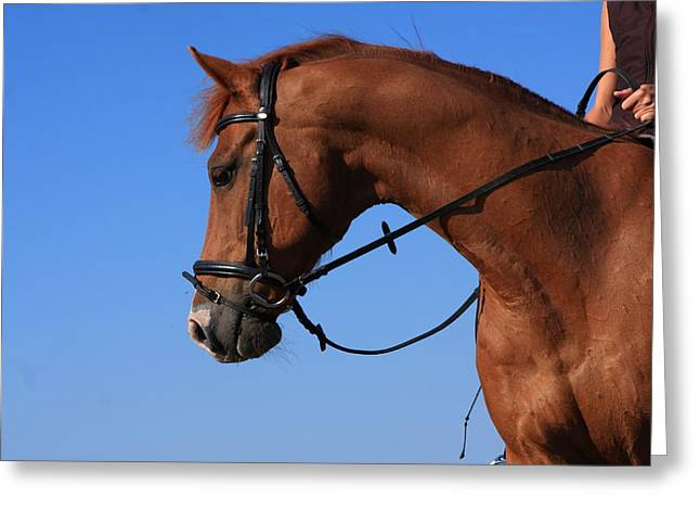 Horse Images Greeting Cards - Chestnut Mare Greeting Card by Aidan Moran