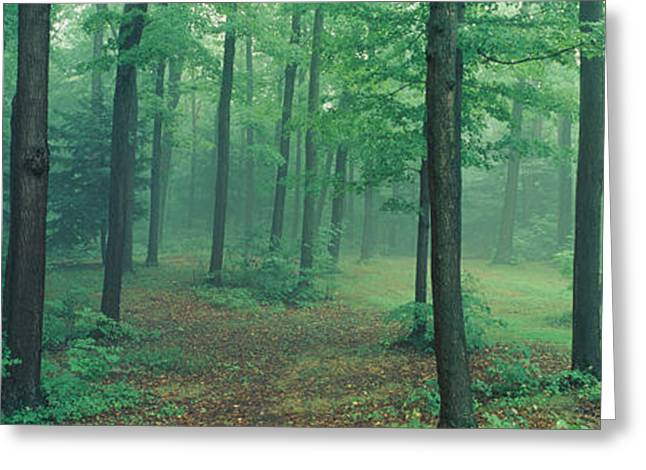 Forest Floor Photographs Greeting Cards - Chestnut Ridge Park, Orchard Park, New Greeting Card by Panoramic Images