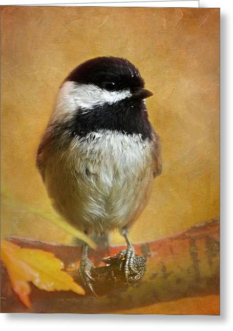 Chickadee Greeting Card by Angie Vogel