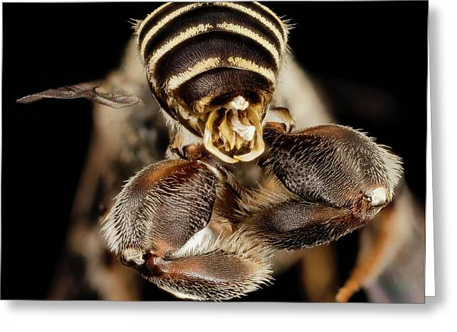 Chimney Bee Greeting Card by Us Geological Survey