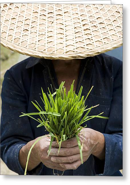 Chinese Peasant Greeting Cards - China. Guangxi Province. Guilin Greeting Card by Tips Images