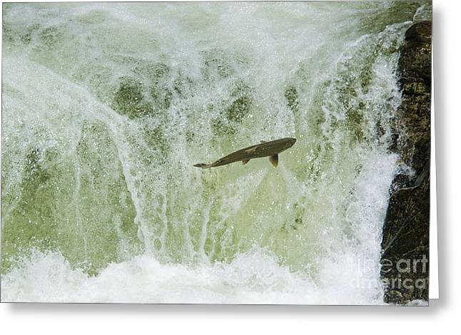 Chinook Salmon Greeting Cards - Chinook Salmon Greeting Card by William H. Mullins