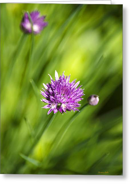 Green Chives Greeting Cards - Fresh Chives Greeting Card by Christina Rollo