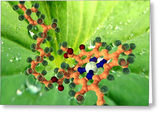 Porphyrin Greeting Cards - Chlorophyll Molecule Greeting Card by Phantatomix