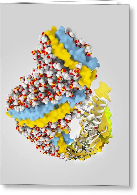 Transfer Greeting Cards - Cholesteryl ester transfer protein Greeting Card by Science Photo Library