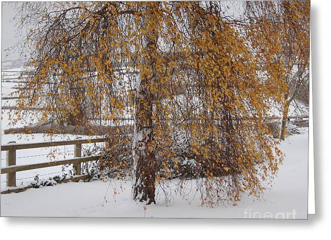 Snowy Evening Greeting Cards - Christmas is Orange Greeting Card by Linda Prewer