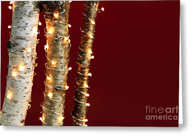Birch Tree Greeting Cards - Christmas lights on birch branches Greeting Card by Elena Elisseeva