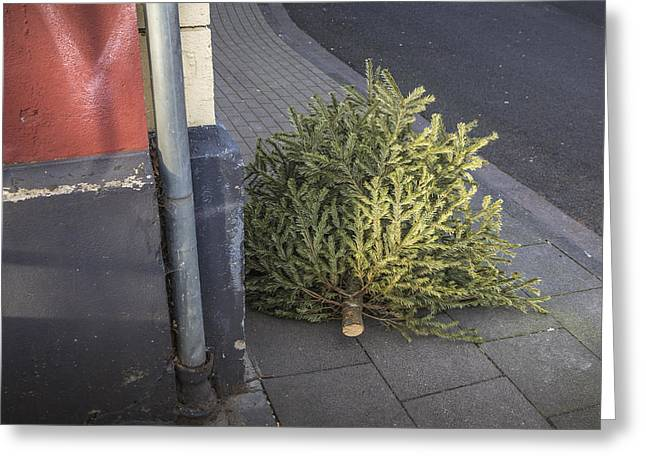 Unadorned Greeting Cards - Christmas tree unadorned on the street Greeting Card by Thomas Olbrich