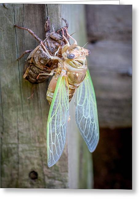 Louisiana Greeting Cards - Cicada emerging Greeting Card by Andy Crawford