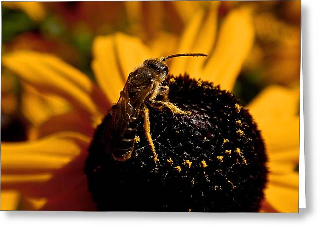 Honey Bee Greeting Cards - Circling Greeting Card by Rona Black