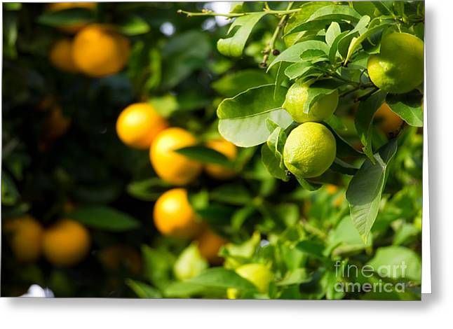 Sour Greeting Cards - Citrus Greeting Card by Sinisa Botas