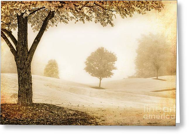 Photographers Greensboro Greeting Cards - Cloaked in Fog Greeting Card by Dan Carmichael