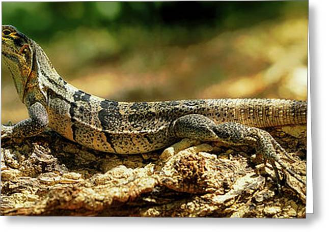 Close-up Of An Iguana, Costa Rica Greeting Card by Panoramic Images