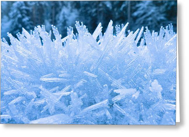 North Fork Greeting Cards - Close Up Of Hoar Frost Along The North Greeting Card by Kevin Smith