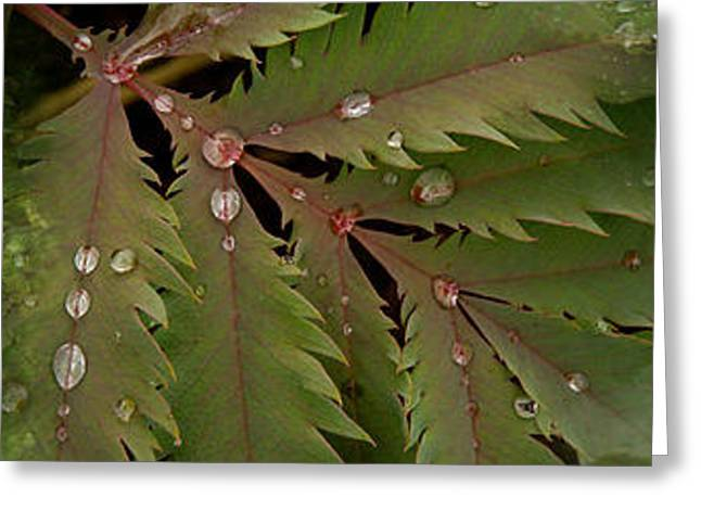 Droplet Greeting Cards - Close-up Of Leaves With Water Droplets Greeting Card by Panoramic Images