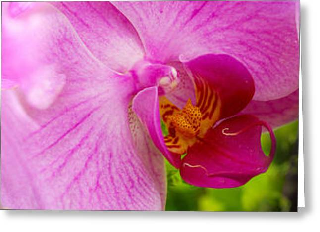 Close-up Of Purple Passion Flowers Greeting Card by Panoramic Images