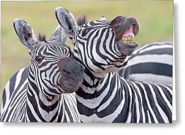 Craters Greeting Cards - Close-up Of Two Zebras, Ngorongoro Greeting Card by Panoramic Images