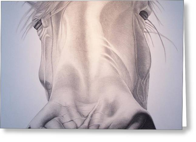 Equestrian Commissions Greeting Cards - Close up Greeting Card by Steve Messenger