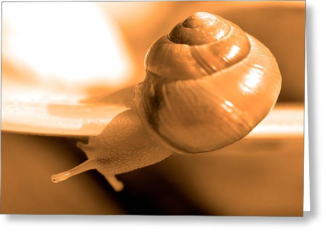 Win Greeting Cards - Closeup of snail Greeting Card by Toppart Sweden