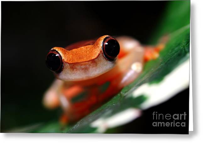 Tree Frog Greeting Cards - Clown Tree Frog Greeting Card by Brandon Alms