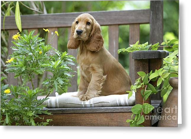 Portrait With Flowers Greeting Cards - Cocker Spaniel Greeting Card by Jean-Michel Labat