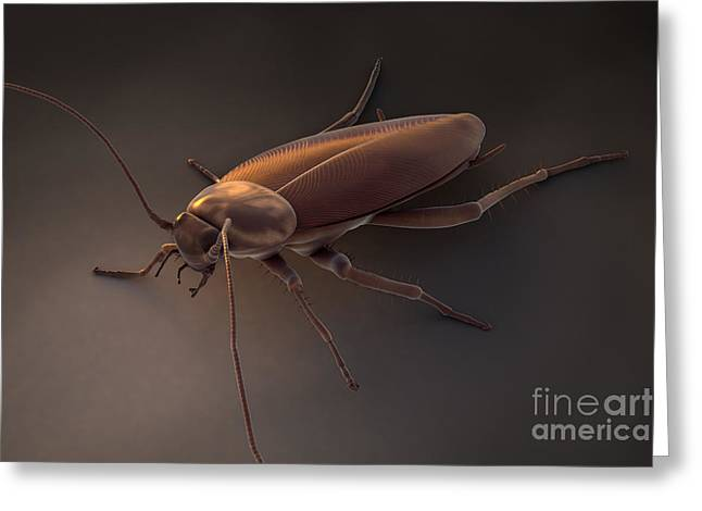 Insect Problem Greeting Cards - Cockroach Greeting Card by Science Picture Co