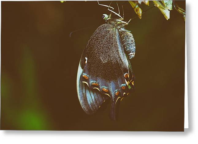 Cocoon Greeting Cards - Cocoon Fresh Greeting Card by Mountain Dreams