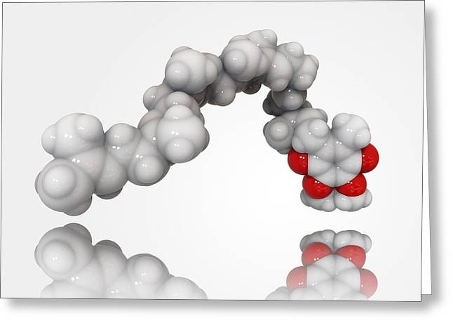 Atp Photographs Greeting Cards - Coenzyme Q10 molecule Greeting Card by Science Photo Library