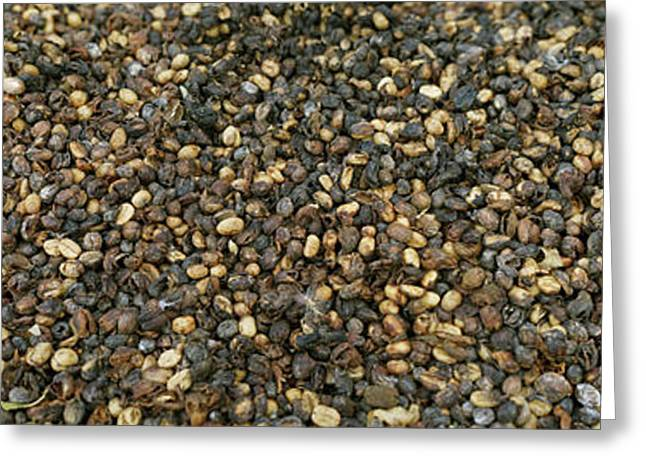 Coffee Beans, Costa Rica Greeting Card by Panoramic Images