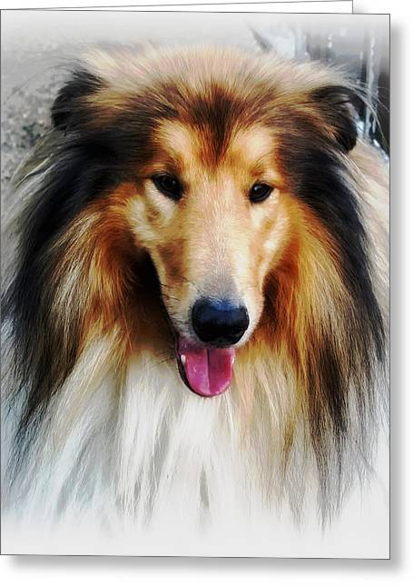 Collie Greeting Cards - Collie Greeting Card by Mountain Dreams