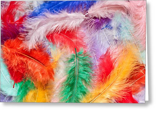 Air Greeting Cards - Colorful feathers Greeting Card by Tom Gowanlock