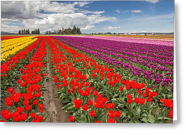 Canon 6d Greeting Cards - Colorful field of tulips Greeting Card by Pierre Leclerc Photography
