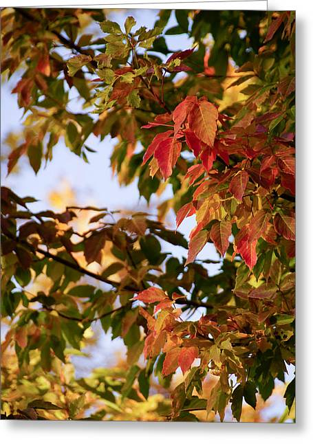 Red Fallen Leave Photographs Greeting Cards - Colorful leaves Greeting Card by Gloria Pasko