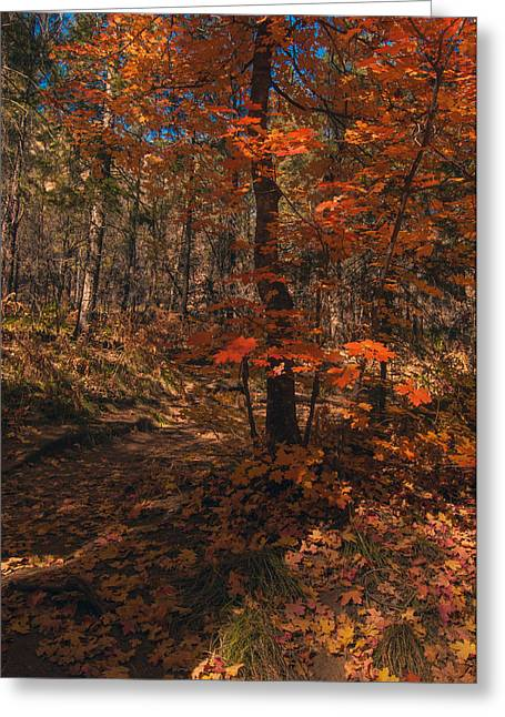 West Fork Greeting Cards - Colorful Path 2 Greeting Card by Tam Ryan