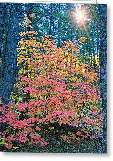 West Fork Greeting Cards - Colorful Rays Greeting Card by Brian Lambert