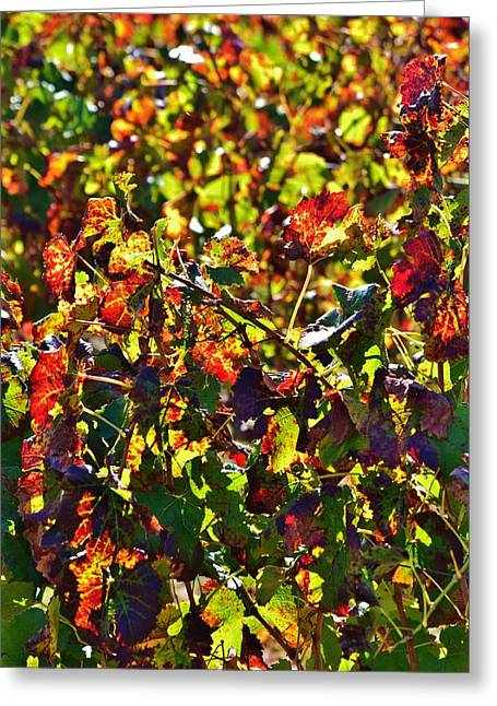 Stellenbosch Greeting Cards - Colors of Autum.... Greeting Card by Werner Lehmann