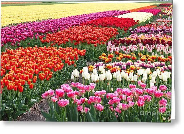 Holland Greeting Cards - Colors of Holland Greeting Card by Lars Ruecker