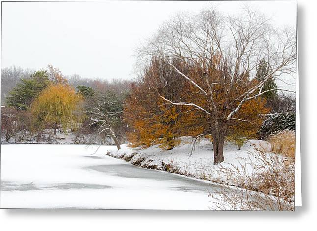 Bare Trees Greeting Cards - Colors of Winter Greeting Card by Julie Palencia