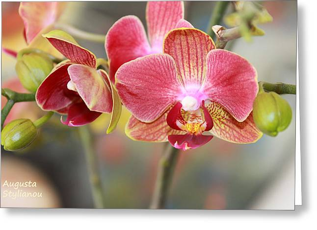 Yellow Line Greeting Cards - Colourful Orchid Greeting Card by Augusta Stylianou