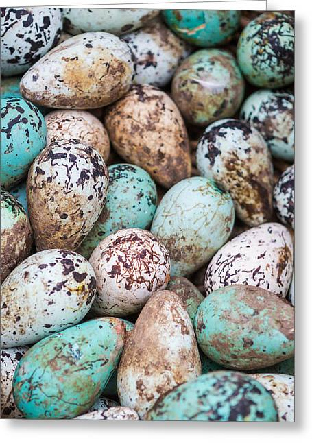 Group-of-objects Greeting Cards - Common Guillemot Eggs, Uria Aalge Greeting Card by Panoramic Images