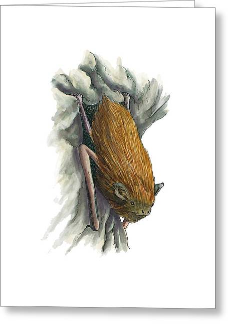 Bat Wings Greeting Cards - Common pipistrelle bat, artwork Greeting Card by Science Photo Library
