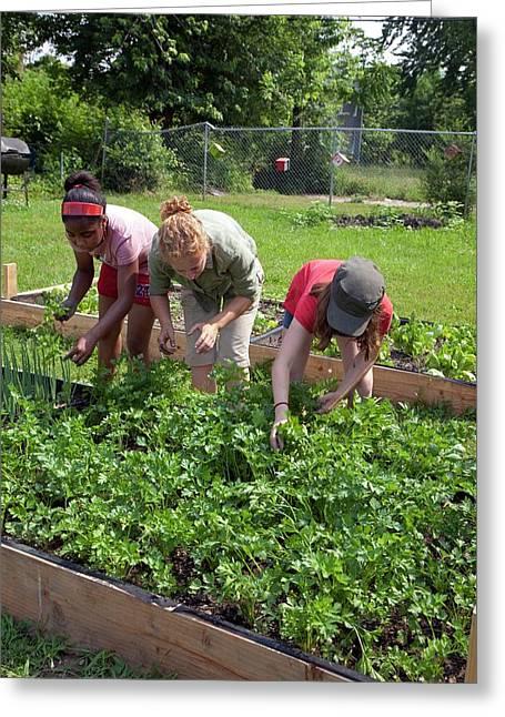 Community Garden Volunteers Weeding Greeting Card by Jim West