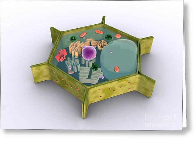 Single-celled Digital Greeting Cards - Conceptual Image Of A Plant Cell Greeting Card by Stocktrek Images