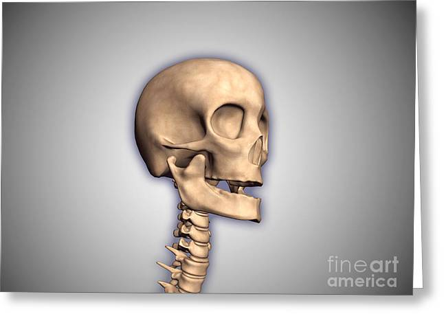 Axis Greeting Cards - Conceptual Image Of Human Skull Greeting Card by Stocktrek Images