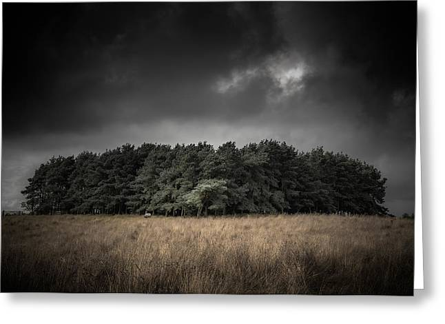 Dark Cloud Greeting Cards - Copse Greeting Card by Chris Fletcher