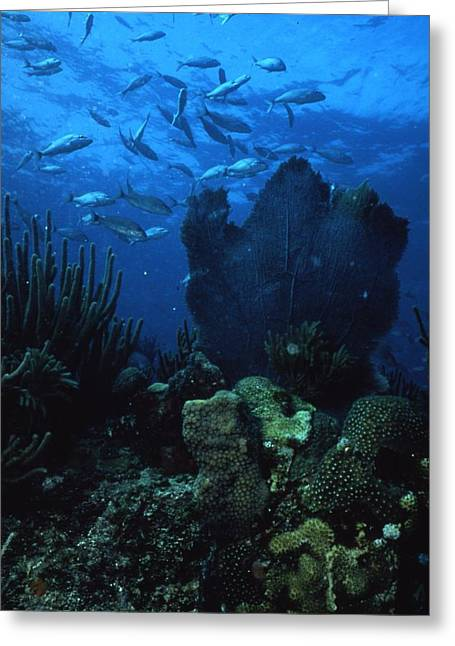 Rare Fish Greeting Cards - Coral in the Gulf of Mexico Greeting Card by Retro Images Archive